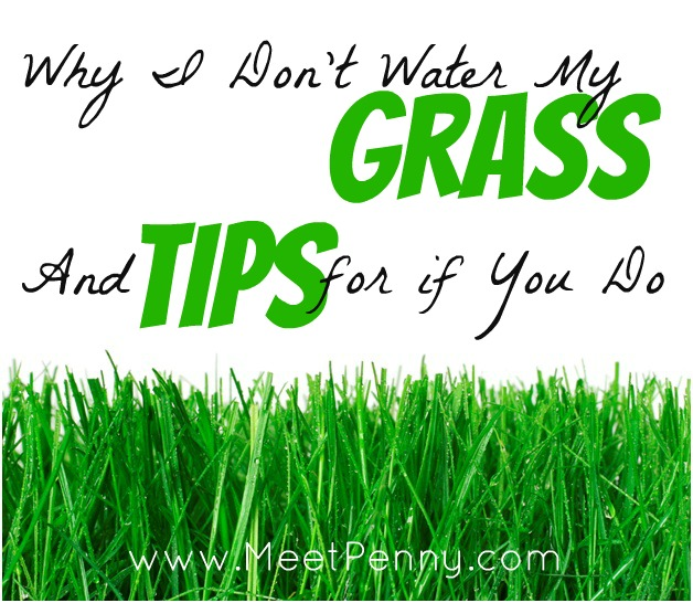 Why I Don't Water My Grass (& Tips for if You Do)