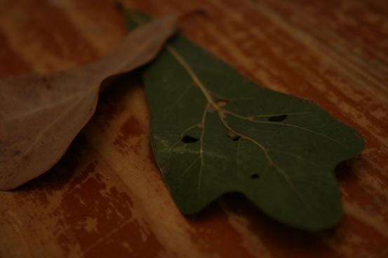 vascular plants experiment