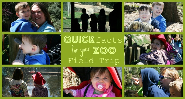 Quick Facts for Your Zoo Field Trip (Free Printable Zoo Trivia)