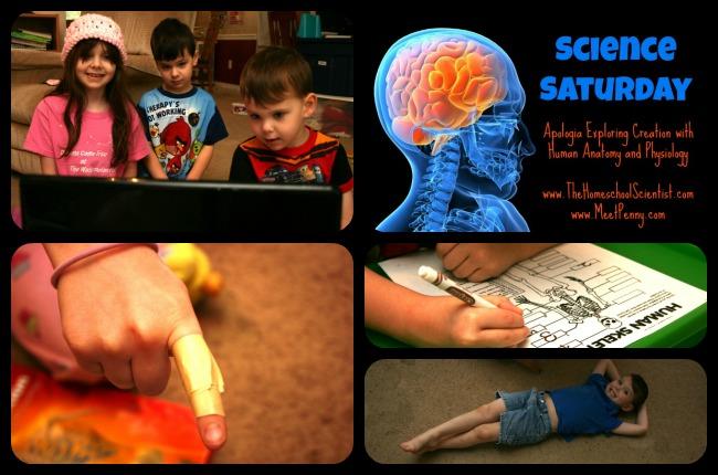Human Skeletal System Lesson