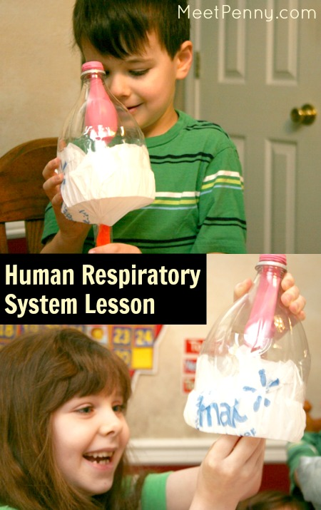 human respiratory system lesson ideas with additional resources for planning