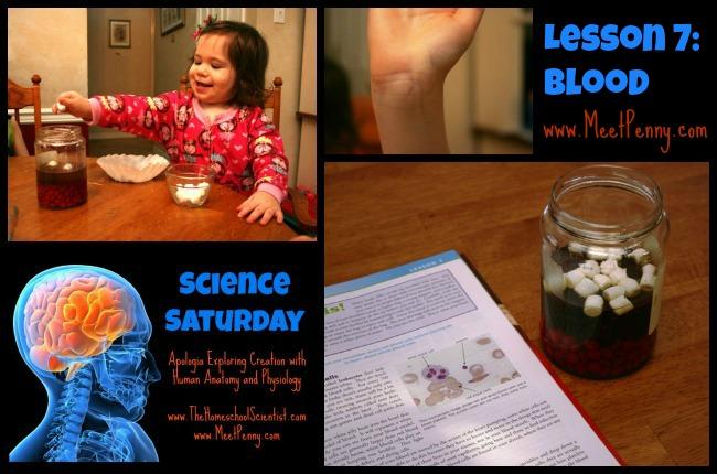 Apologia Anatomy Lesson 7 Blood Unit Study