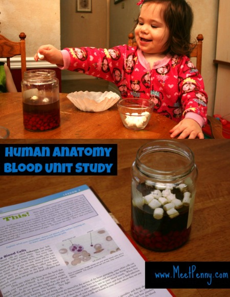 human blood lesson plan - love the model of the blood