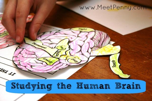 The Human Brain Lesson