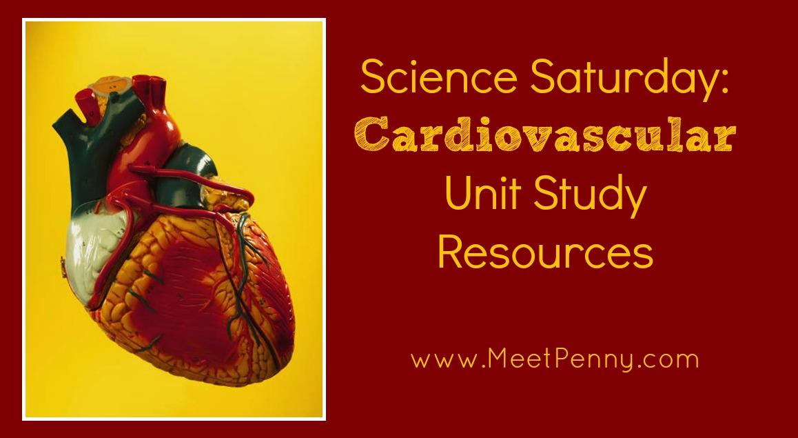 Cardiovascular System Lesson