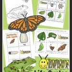 Teaching life cycles through printable worksheets and activities. Lots of hands on fun for preschoolers and kindergarteners.