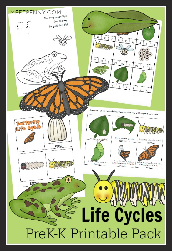 Frog and Butterfly Life Cycles PreK-K Printable Pack